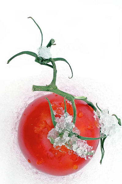Photograph - Fresh Vine Tomato by Tatiana Travelways