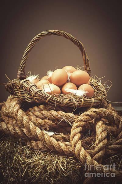 Wall Art - Photograph - Freshly Laid Eggs by Amanda Elwell