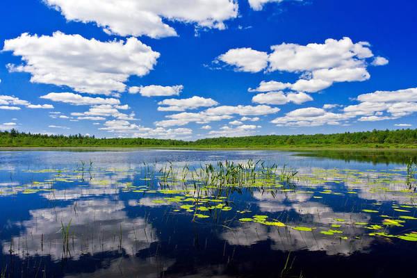Wall Art - Photograph - Freshwater Pond Littoral Zone Habitat by Michael Gadomski
