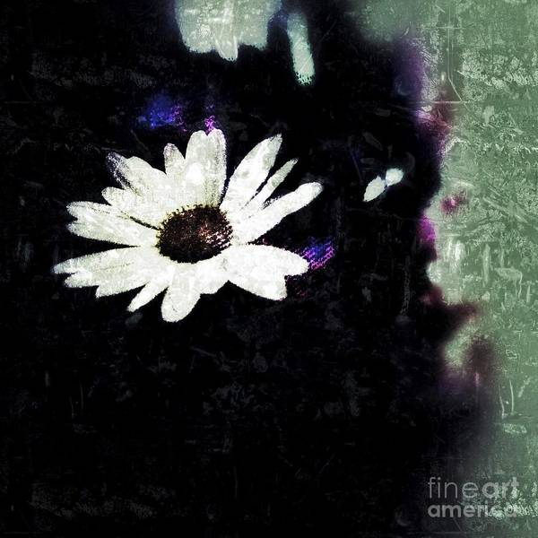 Photograph - Friday Daisy by Jacqueline McReynolds