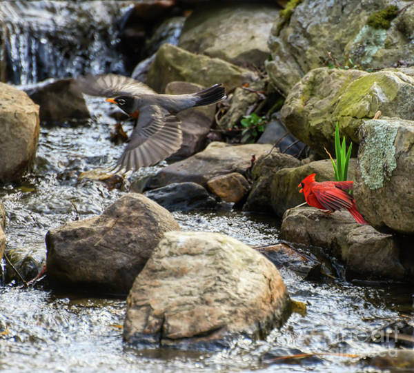 Photograph - Friends At The Watering Hole  by Kerri Farley
