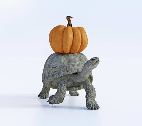 Wall Art - Digital Art - Friends The Tortoise And The Pumpkin by Betsy Knapp