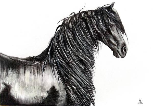 Friesian Drawing - Friesian Stallion Wietze by Celeste Groenewald