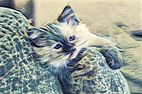 Digital Art - Frisky Blue Eyed Kitten by Don Northup