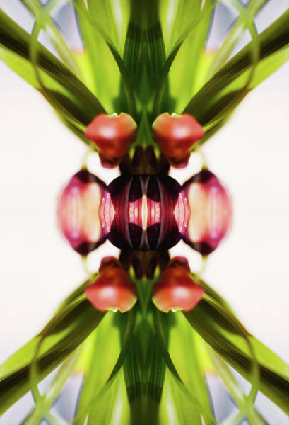 Kaleidoscopes Photograph - Fritillaria Flower by Silvia Otte