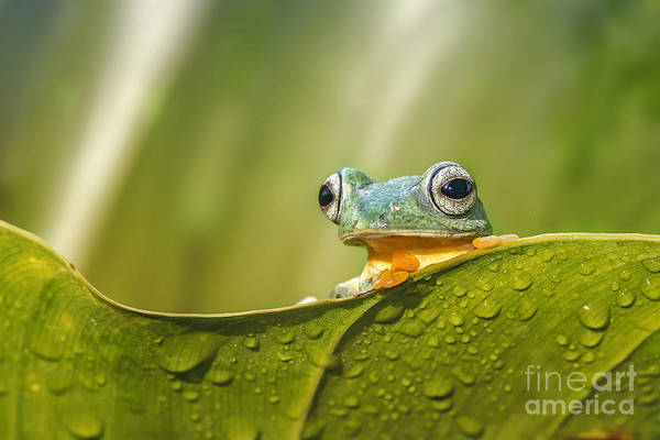 Wall Art - Photograph - Frog Activities by Dikky Oesin