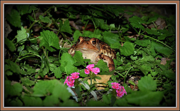 Wall Art - Photograph - Frog And Pink Flowers by Constance Lowery