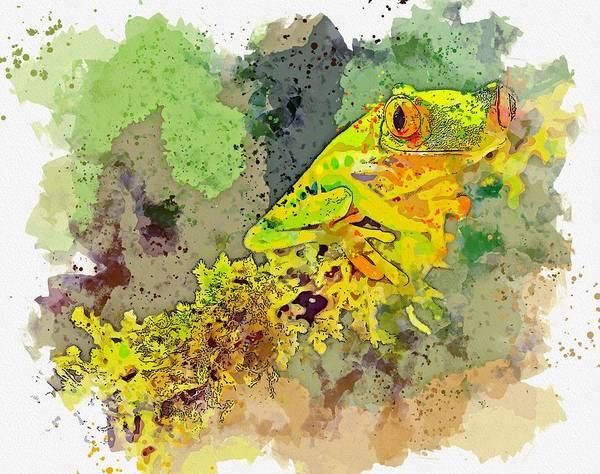Painting - Frog, Costa Rica -  Watercolor By Ahmet Asar by Ahmet Asar