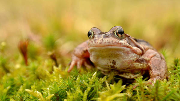 Photograph - Frog by Gavin MacRae