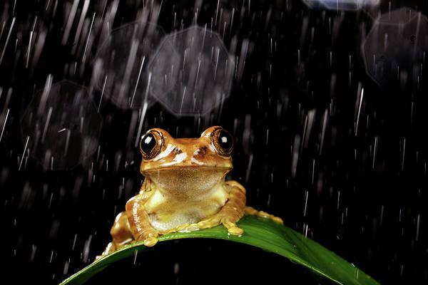 Rain Photograph - Frog In Rain by Markbridger