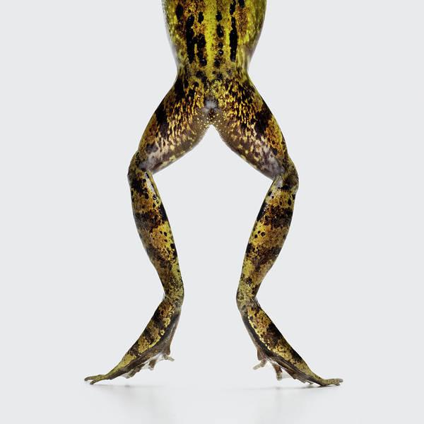Reach Wall Art - Photograph - Frog Legs And Bottom by Maarten Wouters