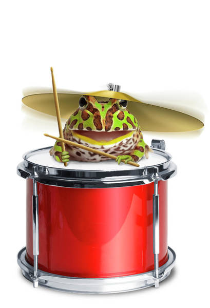 Wall Art - Photograph - Frog Playing Drums by American Images Inc