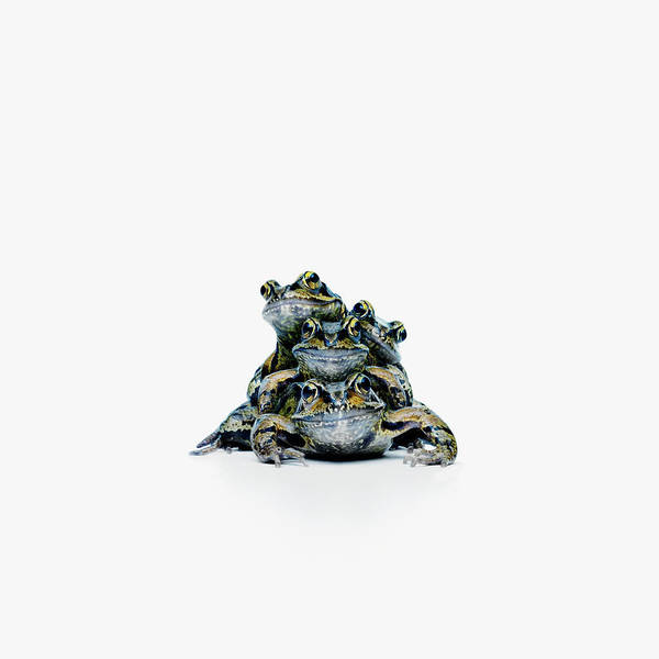 Wall Art - Photograph - Frog Stack by Maarten Wouters