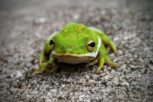 Photograph - Frogger by Vincent Autenrieb
