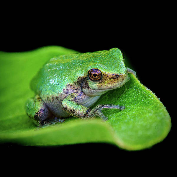 Photograph - Frogie by David Heilman