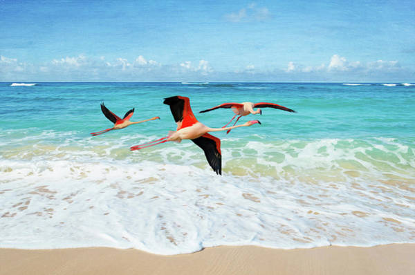 Wall Art - Photograph - Frolicking Flamingos by Laura D Young