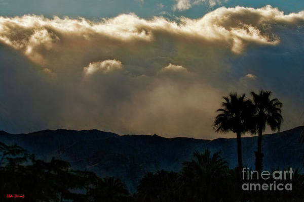 Photograph - From Light To Dark In Palm Dessert  by Blake Richards