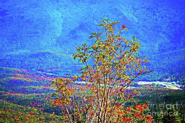 Photograph - From Mount Washington by Patti Whitten