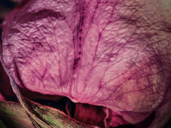 Photograph - From Series Ageing Of The Skin 4 by Juan Contreras