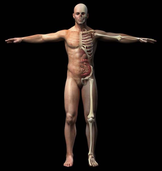 Photograph - Front View Of Male Skeletal by Leonello Calvetti