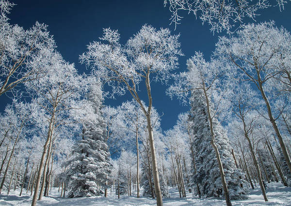Covering Photograph - Frost And Snow Covered Trees, Colorado by Karen Desjardin