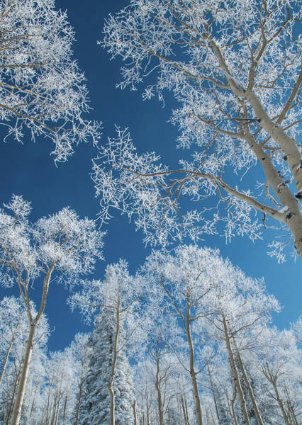 Covering Photograph - Frost Covered Trees On A Cold, Winter by Karen Desjardin
