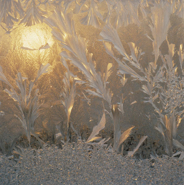 Fragility Photograph - Frost by David De Lossy