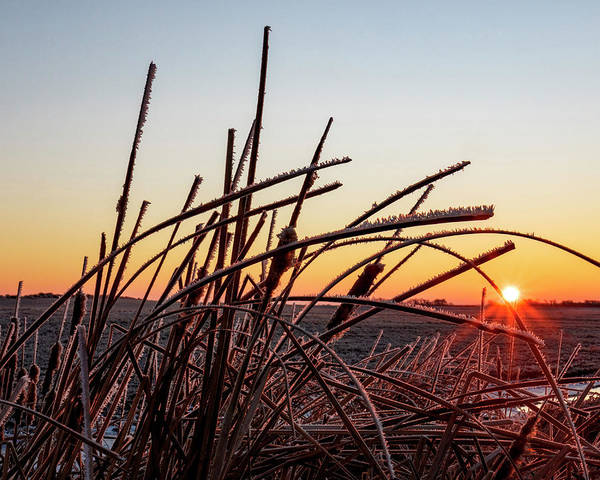Photograph - Frosted Reeds At Sunrise 01 by Rob Graham