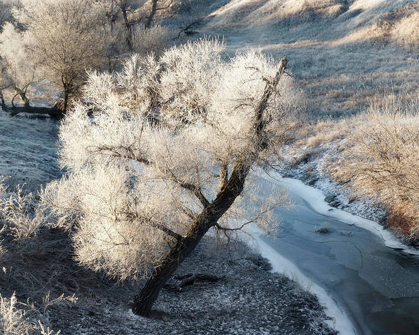 Photograph - Frosted Tree And Creek 01 by Rob Graham
