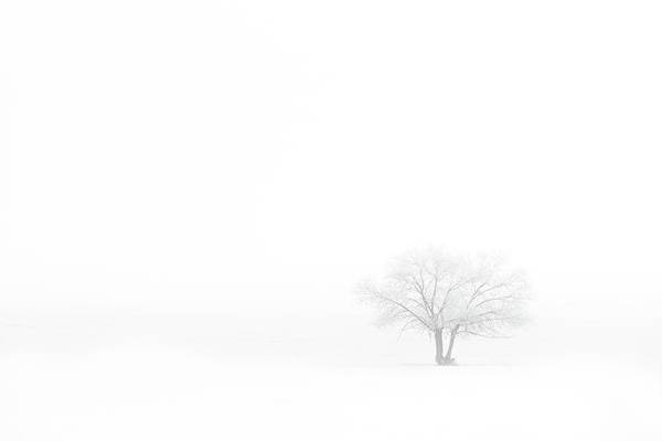 Wall Art - Photograph - Frosted Tree by Darren White