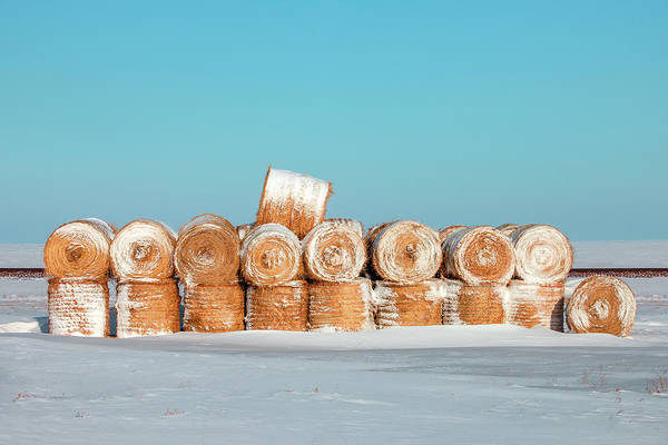 Photograph - Frosted Wheats No. 2 by Todd Klassy