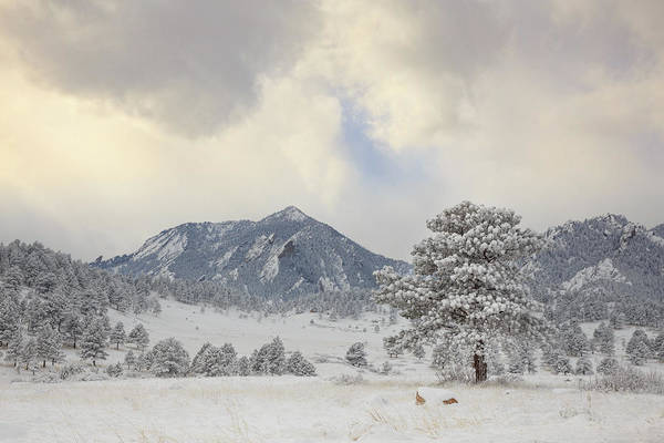 Wall Art - Photograph - Frosty Flatirons by Bridget Calip
