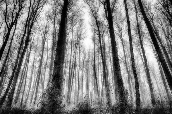 Photograph - Frosty Fog Forest by Dee Browning