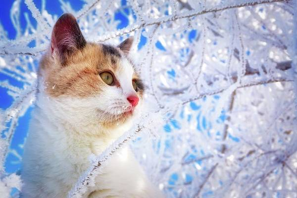Photograph - Frosty Kitty by Bryan Smith