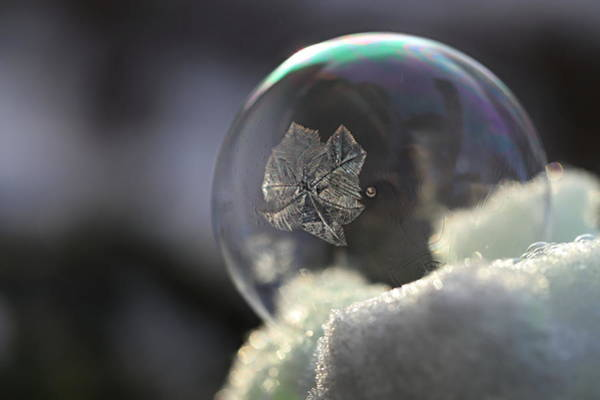 Wall Art - Photograph - Frosty Soap Bubble 12 by Heike Hultsch