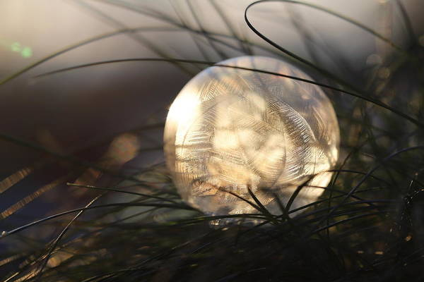 Wall Art - Photograph - Frosty Soap Bubble 4 by Heike Hultsch