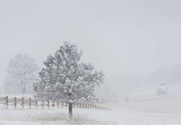Wall Art - Photograph - Frosty Tree And The Fenceline by Bridget Calip