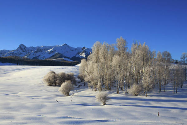 Wall Art - Photograph - Frosty Trees On The Divide by Bridget Calip