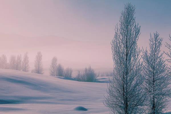 Steamboat Springs Photograph - Frosty Winter Landscape, Colorado by Karen Desjardin