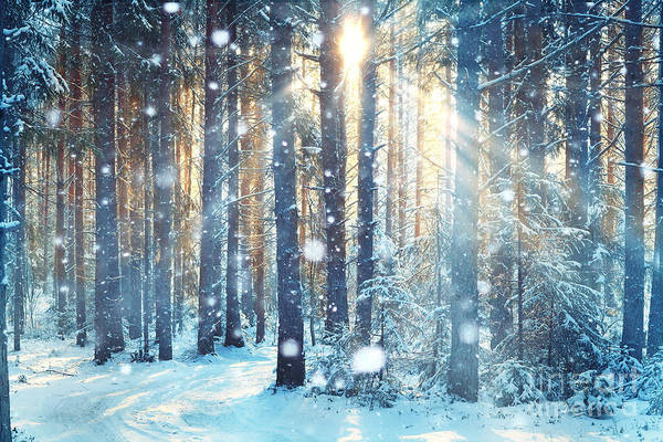 Hiking Wall Art - Photograph - Frosty Winter Landscape In Snowy Forest by Kichigin