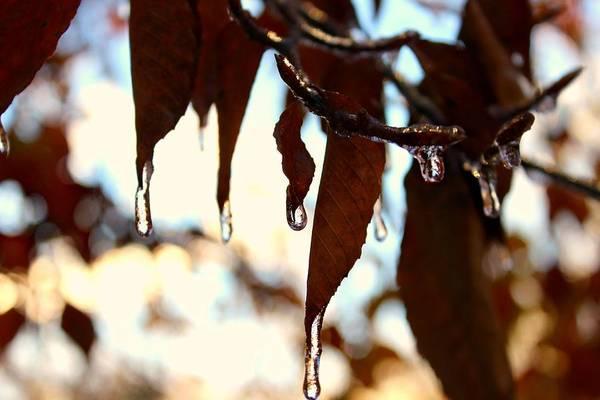 Photograph - Frozen Autumn  by Candice Trimble