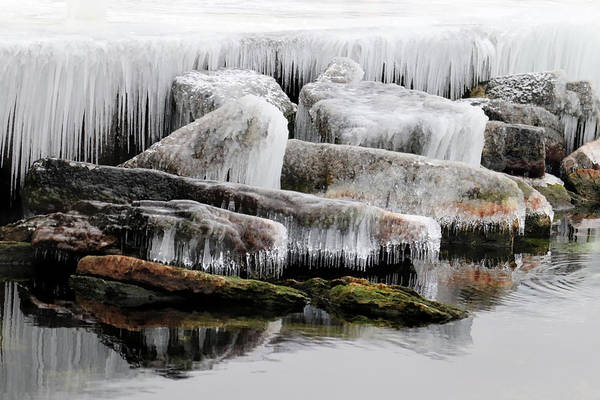 Photograph - Frozen Beauty by David T Wilkinson
