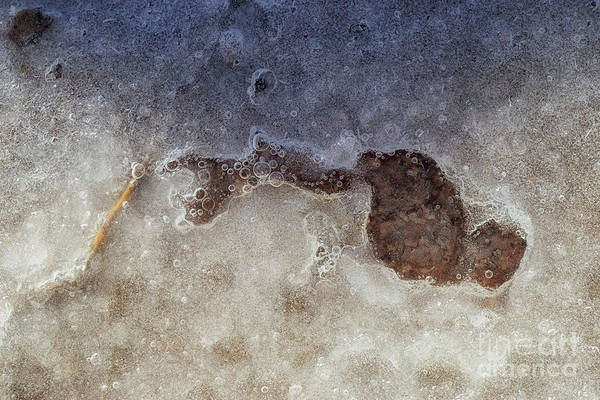 Photograph - Frozen Bubbles by Natural Abstract Photography