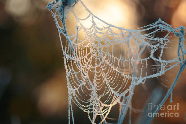 Beauty Of Nature Wall Art - Photograph - Frozen October Morning Cobwebs by Stone36