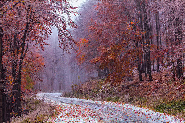 Photograph - Frozen Road In Frosted Forest by Evgeni Dinev