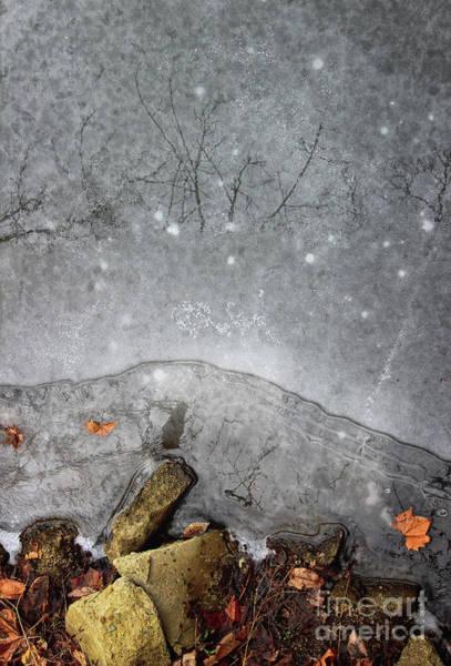 Photograph - Frozen Skies by Karen Adams