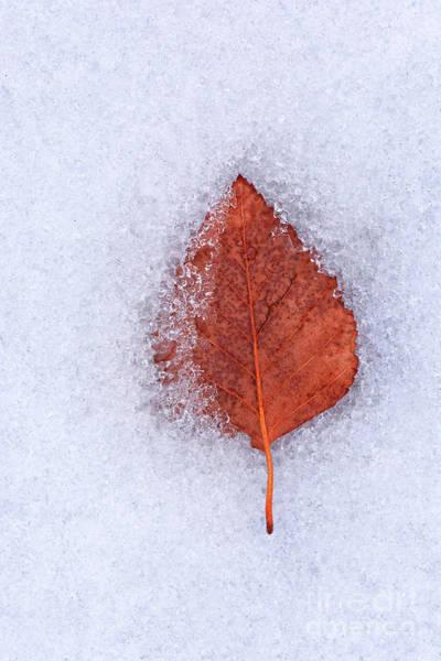 Photograph - Frozen by Susan Warren