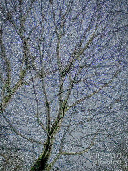 Wall Art - Photograph - Frozen Tree by William Norton