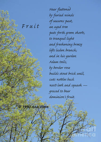 Photograph - Fruit by Ann Horn
