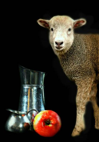 Wall Art - Photograph - Fruit Of Thy Lamb by Diana Angstadt